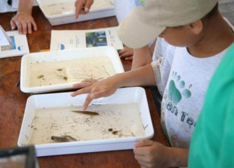 A volunteer examines a small fish collected from Nine Mile Creek