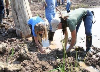 The Geddes Brook restoration will have 50,000 native species, re-established wetlands, and improved habitat