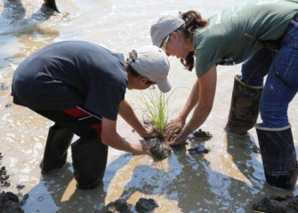Heather Philip, Senior Scientist, Parsons, helps to install aquatic plants to help improve water quality, stabilize the soil, and restore wetland habitat