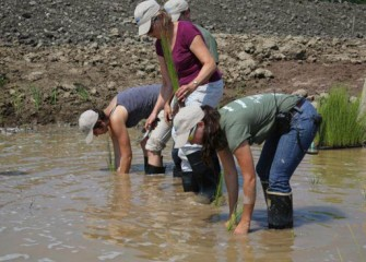 Nancy Bronstein, Onondaga Lake Community Participation Working Group member, works alongside staff volunteers to plant wetland species