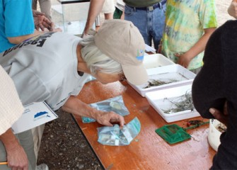 Volunteers look at species collected from Nine Mile Creek. Monitoring programs assess the progress of habitat restoration and enhancement.