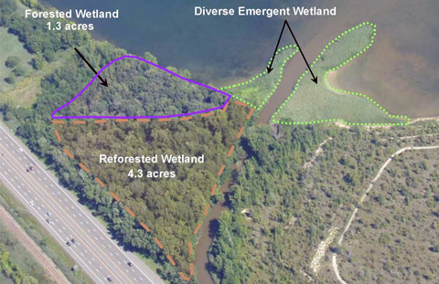 Diverse wetlands at the mouth of Nine Mile Creek will support a variety of amphibians, reptiles, animals and birds.