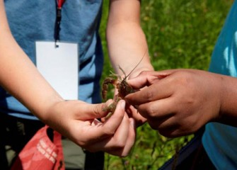 Students Find a Crayfish While Searching for Macroinverterbrates in Onondaga Creek.
