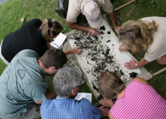 Teachers Examine their Collection of Macroinvertebrates Found in Saw Mill Creek in Willow Bay, Liverpool