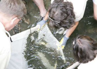 Teachers Extract Samples in Saw Mill Creek, Willow Bay in Liverpool