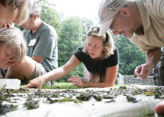 Honeywell Institute for Ecosystems Education Teachers Explore their Findings from Saw Mill Creek