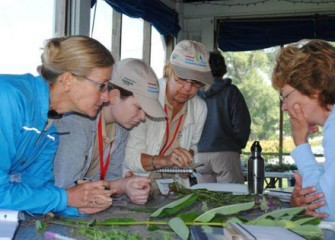 Teachers Identify a Variety of Plant Species Found Near Onondaga Lake.