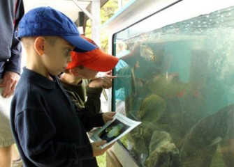 Young Sportsmen Observe the Different Types of Fish that Were Taken from Onondaga Lake.