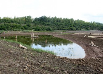 Water pool in the new wetlands