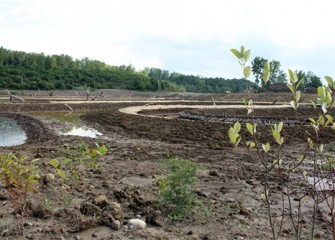 New plantings at the Geddes Brook wetlands