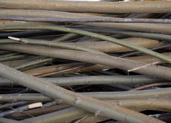 Shrub Willow Cuttings