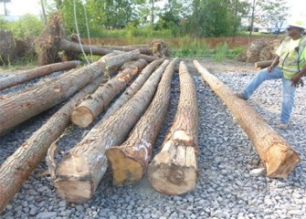 A worker observes as chains are set to lift logs into creek bed.