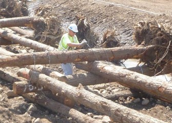 A worker fastens logs; roots left on trees will provide additional habitat.