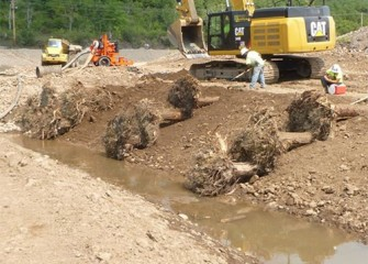 Tree trunks with roots are placed to provide additional shoreline support and habitat.