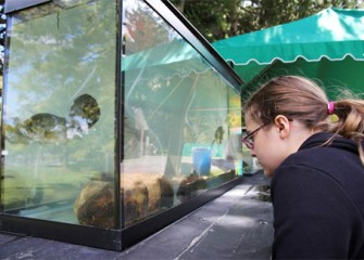 Hailey Vertigan, of Elbridge, N.Y., looks at fish from Onondaga Lake on display during the 2012 Honeywell Sportsmen's Days at Carpenter's Brook.
