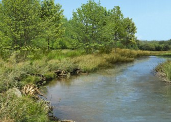 Artist's rendering of future Nine Mile Creek