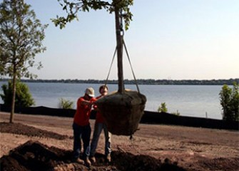 Trees are planted at the Southwest Lakeshore.