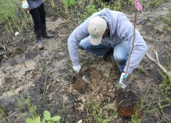 A student digs a hole deep enough to hold the tree's root ball.