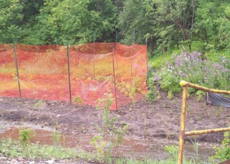 Temporary fencing is installed to protect young plants from deer and other animals.