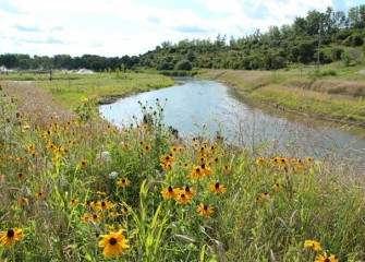 Nine Mile Creek and its habitat will continue to improve as plants mature.