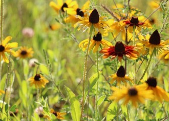 Native plants produce a beautiful progression of blooms and textures.
