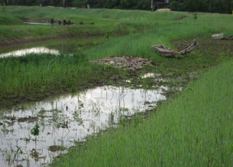 A variety of plants and natural habitat structures installed in the wetlands will attract a diversity of wildlife.