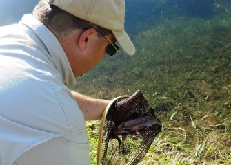 Jim Fitzgerald nets a rainbow trout caught by Aaron Butler and releases it back into the brook.