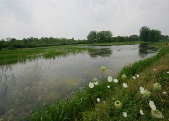 The 9-acre LCP wetlands was the first of several areas Honeywell planted with native vegetation to restore habitat near Onondaga Lake.