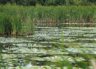 Healthy habitat near and around Onondaga Lake is key to the survival of bird and wildlife species in the area.