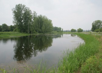 The wetlands, located downstream from the former Linden Chemical and Plastics (LCP) facility near Onondaga Lake, were enhanced with approximately 12,000 native trees and plants in fall 2007.