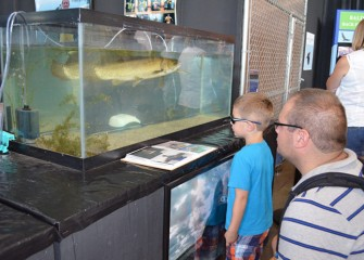 Exhibits include some of the fish found in Onondaga Lake, like the primitive species called bowfin, or sometimes dogfish.