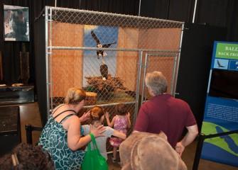Especially popular with fairgoers was the Bald Eagle provided by Onondaga Lake exhibit partner Montezuma Audubon Center.