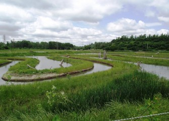 Geddes Brook's new more natural meandering channel is designed to flood adjacent wetlands during high water periods.
