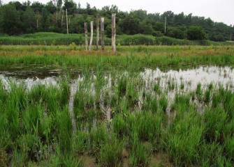 Tall logs installed upright in the wetlands (background) provide birds a place to perch and view the surrounding environment.