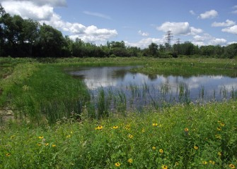 Seventeen acres at Geddes Brook wetlands have been transformed by removing contaminated soil and planting 50,000 native shrubs, flowers and trees.