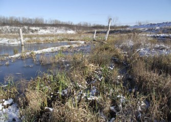 A beautiful morning at the Geddes Brook wetlands after first snow on the ground this season.