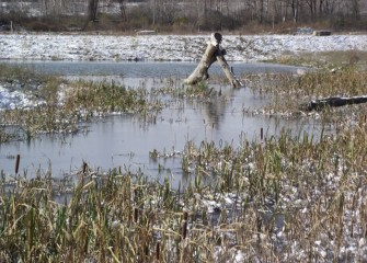 Cattails and other emergent species provide important underwater habitat for invertebrates, which in turn serve as food for fish and waterfowl.