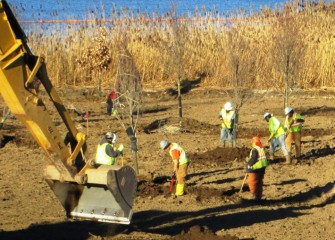 Workers plant red maples, native to the forest wetland ecosystem. A swamp white oak (with leaves), also native, is visible in back.