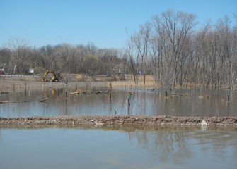 Plantings in the forested wetlands were specifically selected by habitat experts for wet conditions.