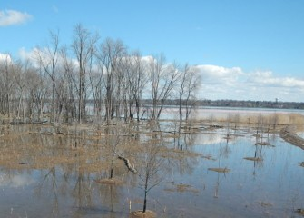 Habitat experts continually monitor the forested wetlands, observing and recording signs of growth as the water level recedes.