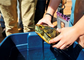 Students are able to closely examine a painted turtle.