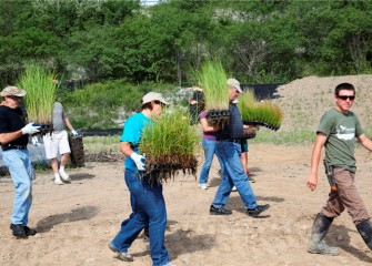 Volunteers carry native grasses – prairie cordgrass (left), fox sedge (center), and path rush (far right) - to the planting area. Prairie cordgrass was once one of the most common plant species on the western shoreline.