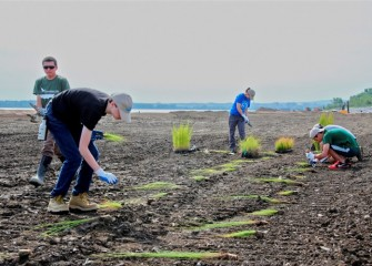 Volunteers lay out the young plants for proper spacing, in order to best establish the new habitat. The area will later be flooded with water to create the wetland.