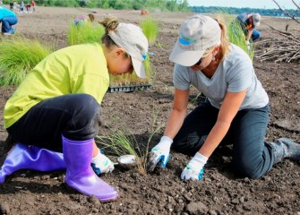 Altogether one hundred native freshwater marsh, grassland, and woodland plant species will eventually be planted in shoreline wetlands to create a healthy aquatic ecosystem.