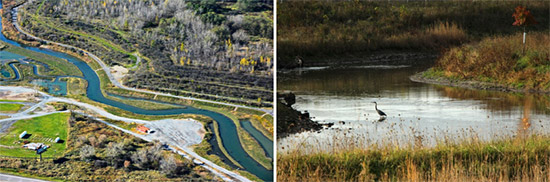 Left: Work at Nine Mile Creek was completed in mid-October; this section, near Geddes Brook, was realigned and graded to create floodplains and wetlands. Right: A great blue heron in Nine Mile Creek.