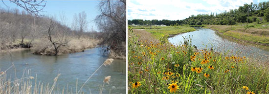 About 41,000 native plants, trees, and shrubs are now supporting a thriving ecosystem. Left: Nine Mile Creek before remediation. Right: Nine Mile Creek after restoration.