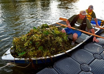 Corps volunteers removed over 2,200 pounds – more than one ton – of invasive European water chestnut on August 6.
