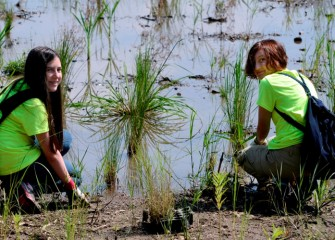 Olivia Mascagni (left) and Mikaela Kaminski plant native grasses in wetlands which are being transformed into improved habitat for wildlife.