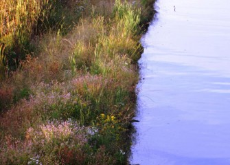 The banks near the mouth of Nine Mile Creek planted just one year ago now grow a tapestry of native species.