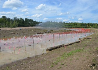 New plantings are fenced off to keep geese out until the plants become established.